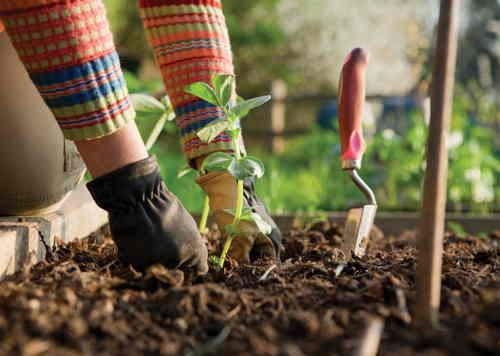 consejos cuidar jardin